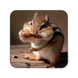 chipmunk_stuffing_his_face_sticker-rb0450d92cbaa4fdbae2f5f1e4c9c8c7c_v9wf3_8byvr_324